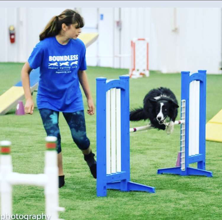 Dog agility establishes emotional connections