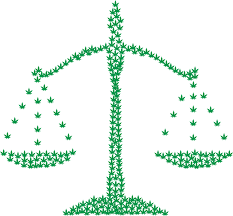 The leaves of a marijuana plant shows the immorality of the drug war. The scales of moral justice weighs on the war on drugs. Photo Credits: Creative Commons.